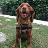 dog walker in singapore