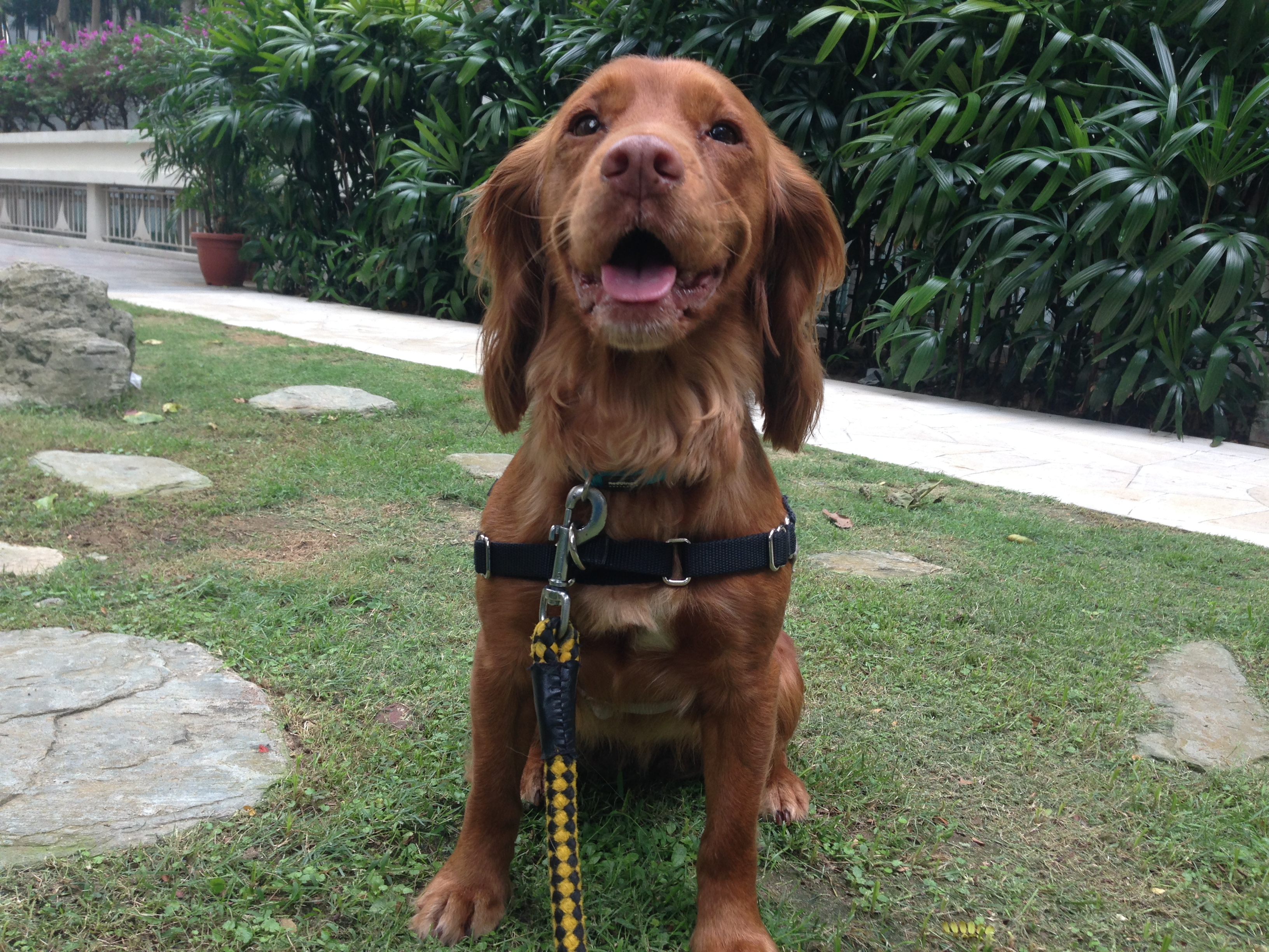 dog walker in singapore