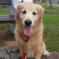 dog-walker-300-533-debbie