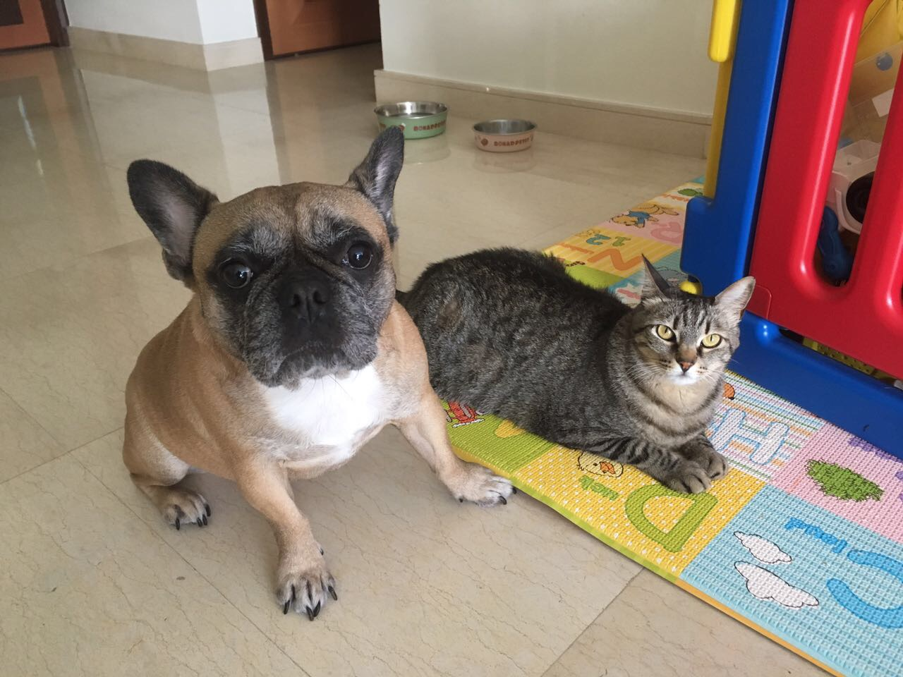 Home Pet sitting in Singapore