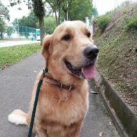 Singapore Dog Walker
